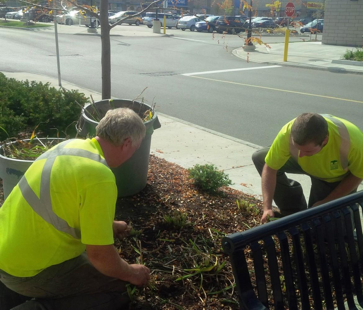 green thumb team weeding