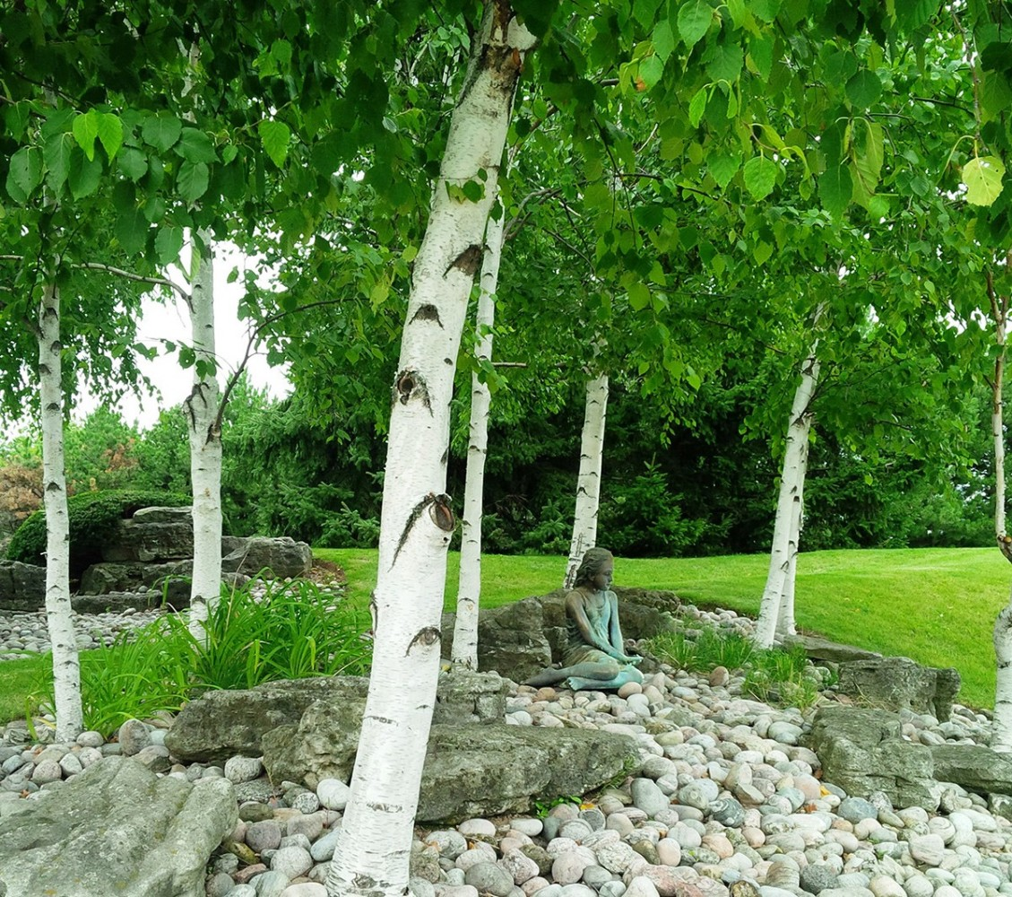 birch tree in backyard