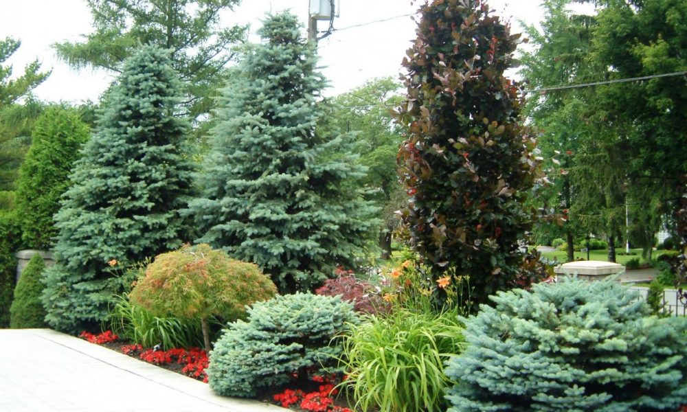 trees and shrubs oakville
