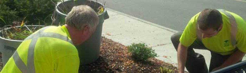 hand-weeding-commercial-property-green-thumb-two-men-pulling-weeds