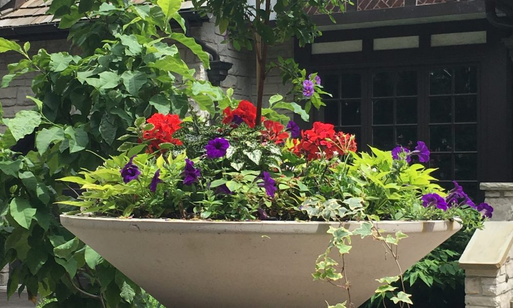 big stone planter with red flowers