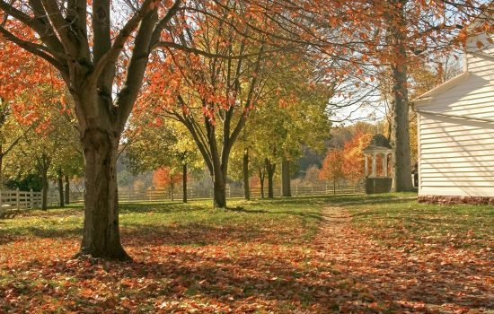 A colorful Fall view of the historic Longstreet Farm in oakville.