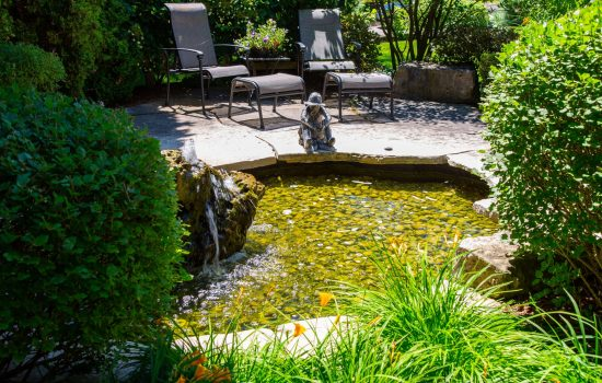 backyard staging pond