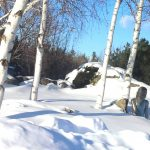 Winter Wonderland- Green Thumb Landscaping- image of snow covered gardens