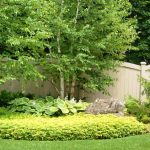 What kind of tree should I plant?- spruce & birch trees in a beautiful garden bed