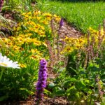 What To Plant In a Pollinator Garden- colourful flowering perennials in a garden bed