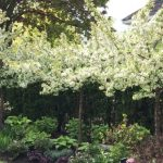 Best Ways To Upgrade Your Backyard Landscaping- beautiful crab apple trees in a garden bed