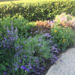 How To Keep Your Garden Blooming- beautiful summer gardens with black-eyed susans, hedges, lavender, etc.