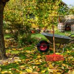 fall leaves on the grass with a rake and wheelbarrow under a tree